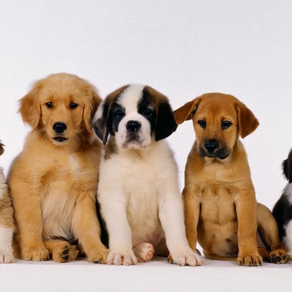 Puppy Socialisation Halewood