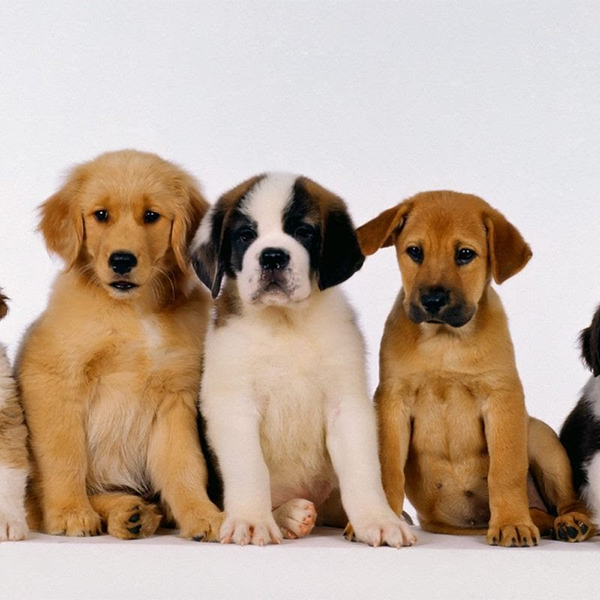 Puppy Socialisation Liverpool