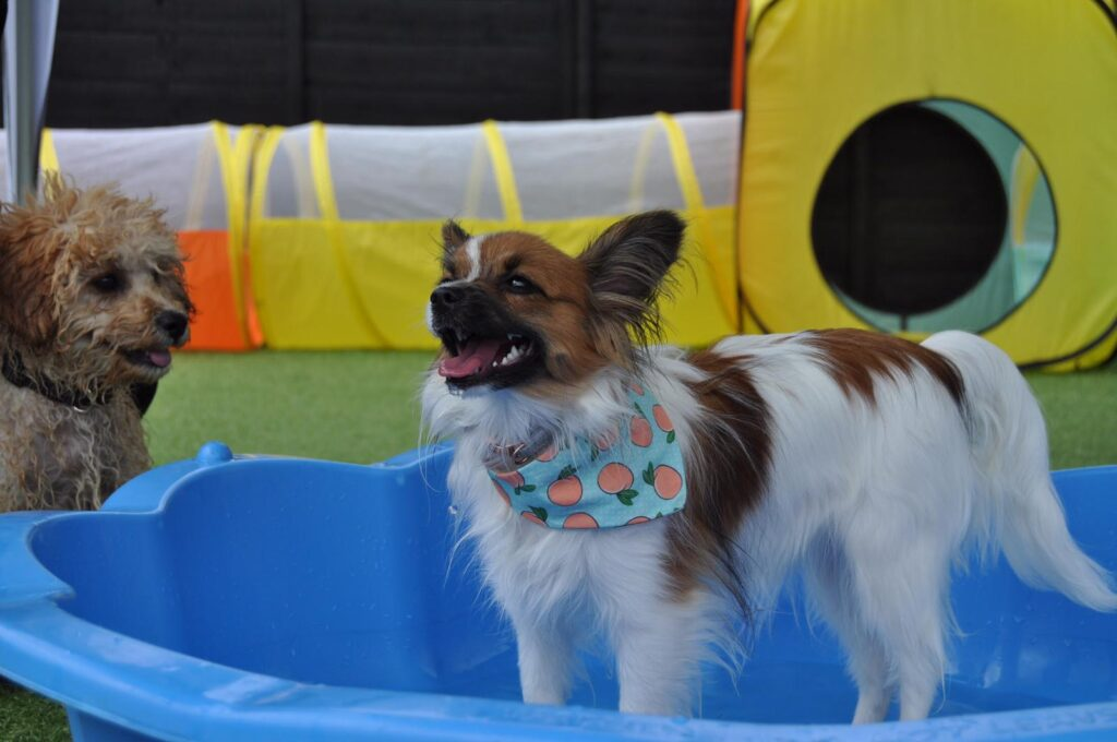 doggy day care & puppy socialisation  liverpool