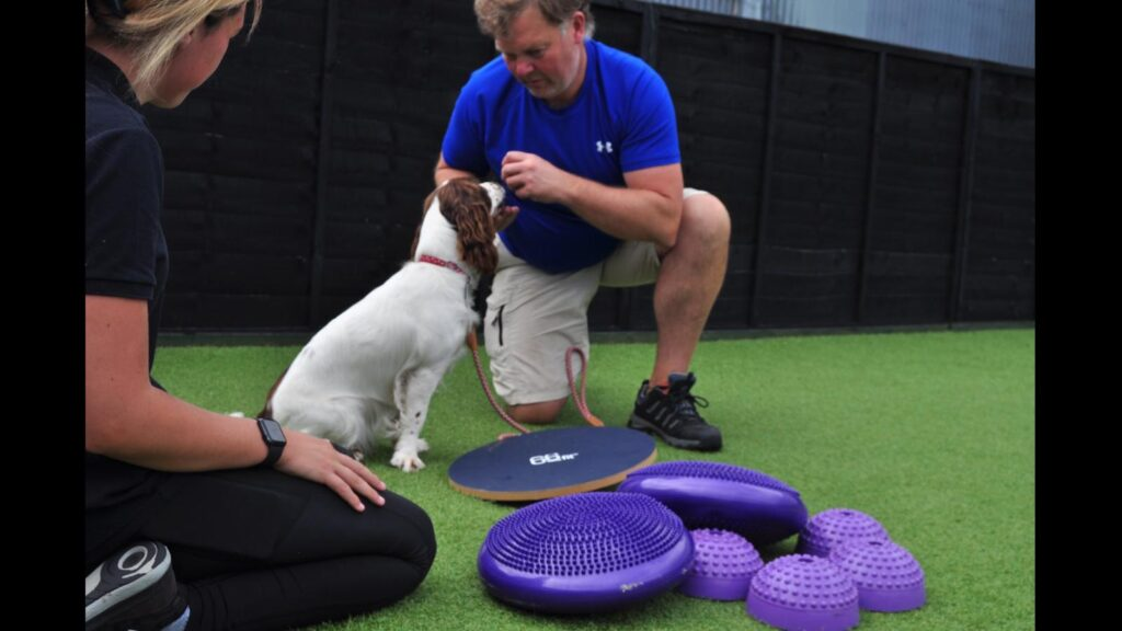 premium dog day care Liverpool