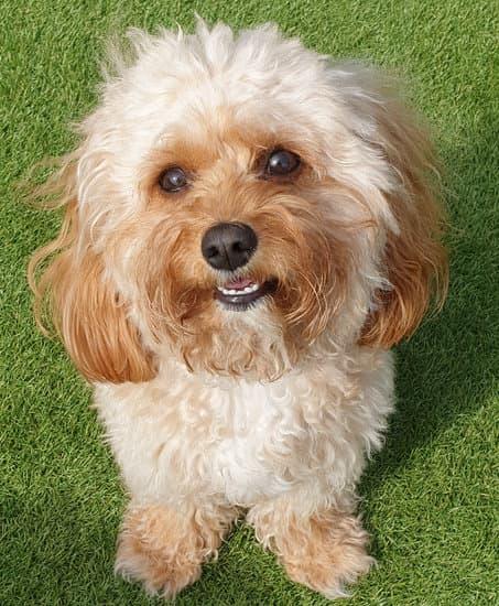 Precious PAws doggy day care Liverpool