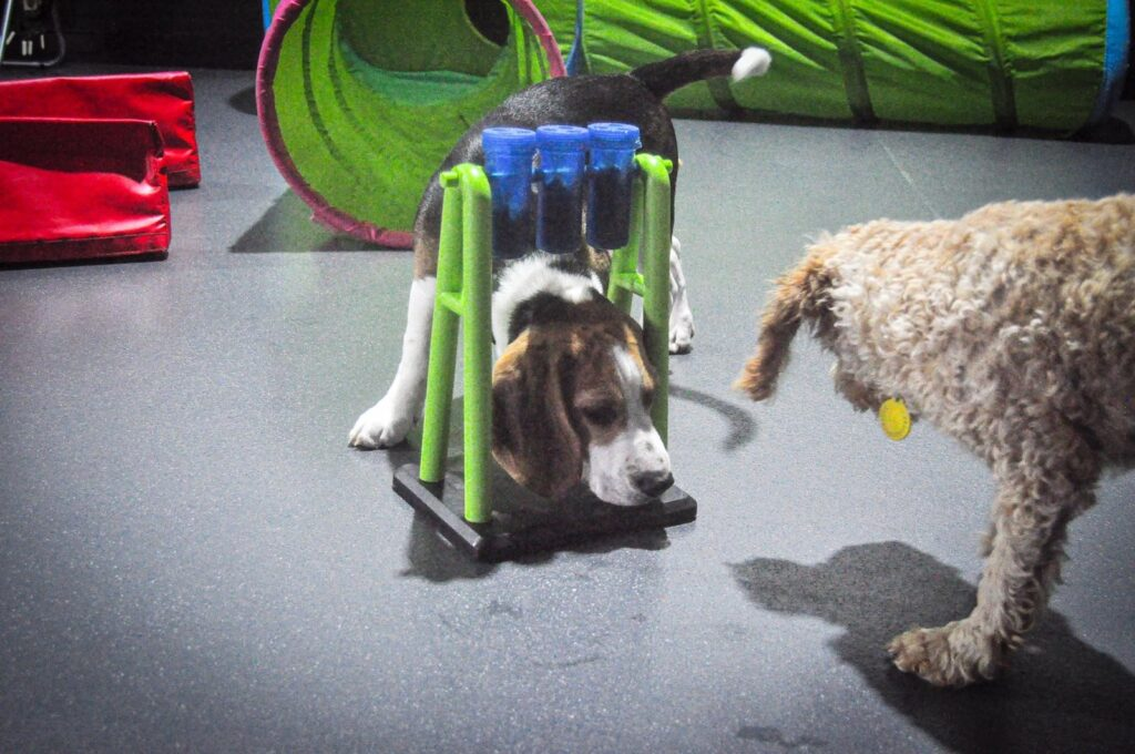 Doggy day care liverpool physical enrichment